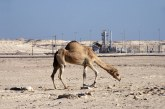 PRESENZA ENI IN LIBIA RIDOTTA AL MINIMO